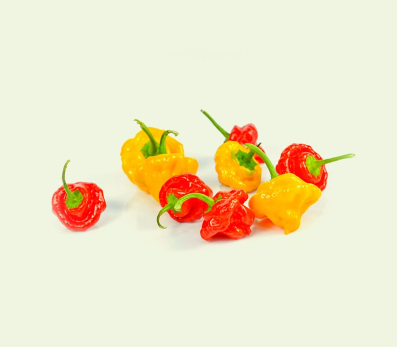 Scotch bonnet pepers